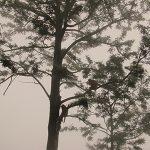תם צייגר - עץ בערפל